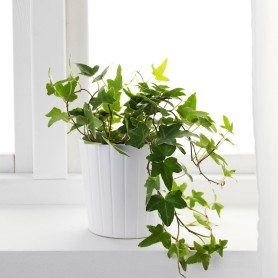 space-optimized-microapartment-english-ivy-houseplant